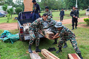 Thap Lan rangers unloading Siam rosewood tree (Dalbergia cochinchinensis) timber confiscated from poachers, Thap Lan National Park, Dong Phayayen-Khao Yai Forest Complex, eastern Thailand, August, 201... - Ann  & Steve Toon