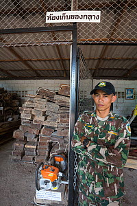 Pang Sida ranger Wisak Thongseekram at evidence store containing Siam rosewood tree (Dalbergia cochinchinensis) confiscated from poachers, Pang Sida National Park, Dong Phayayen-Khao Yai Forest Comple... - Ann  & Steve Toon