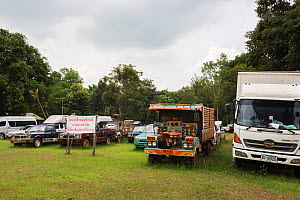 Vehicles confiscated from Siam rosewood tree poachers, stored as evidence, Thap Lan National Park, Dong Phayayen-Khao Yai Forest Complex, eastern Thailand, August. - Ann  & Steve Toon