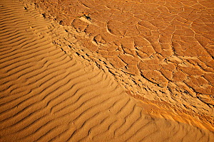 Ripples in sand and cracked mud, Parque Natural de Corralejo, Fuerteventura, Canary Islands. April 2013.  -  Edwin  Giesbers
