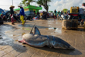 Large shark for sale in fish market, Bali, Indonesia, August 2014.  -  Inaki  Relanzon