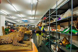 Man with taxidermy specimens and endangered wildlife products confiscated by the Spanish police at Adolfo Suarez Madrid-Barajas Airport in accordance with CITES, stored in a government warehouse, Spai... - Inaki  Relanzon