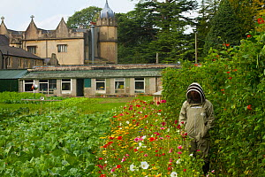 Member of Gwent beekeepers in protective suit in garden with runner beans (Phaseolus coccineus) with line of wildflowers along side to attract bees, Llantarnam Abbey Cwmbran, Gwent, Wales, UK. Septemb... - David  Woodfall