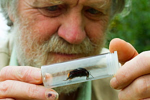 Scientist Ivan Wright, looking at Red tailed bumble bee (Bombus lapidartius) in test tube whilst carrying out research. Cowley, Oxford, UK September 2014.  -  David  Woodfall