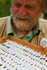 Scientist Ivan Wright with sample of pinned bees caught during research, Cowley, Oxford, UK, September 2014. - David  Woodfall