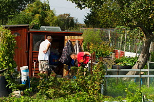 Productive allotment including bee pollinated plants, Eastbourne, East Sussex, England, UK, September 2014. - David  Woodfall