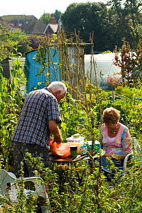 Couple having meal in allotments surrounded by bee pollinated plants such as beans, Eastbourne, East Sussex, England, UK, September 2014. - David  Woodfall