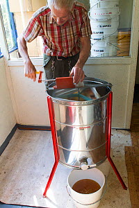 Beekeeper Nick Hunt, using machine to extract honey from combs. Usk, Gwent, Wales, UK, August 2014.  -  David  Woodfall