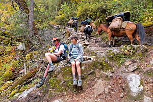 Hikers taking a break as a pack train passes them on day two of the Jhomolhari Trek. Bhutan, October 2014. Model released.  -  Kirkendall-Spring