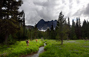 Hikers on the trail to Three Fingered Jack, Mount Jefferson Wilderness, Duschutes National Forest.  Oregon, USA, July 2014. Model released.  -  Kirkendall-Spring