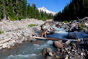 Hiker crossing  Newton Creek, Elk Meadows Trail, Mount Hood Wilderness.  Oregon, USA, July 2014.  Model released. - Kirkendall-Spring