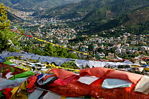 Prayer flags on hill above the city of  Thimphu. Bhutan, October 2014. - Kirkendall-Spring