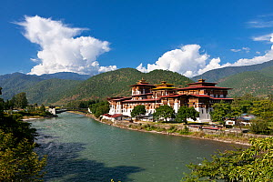 Punakha Dzong, built on the confluence of the Mo Chhu and Pho Chhu River. Bhutan, October 2014. - Kirkendall-Spring