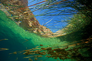 Underwater view of aquatic plants in Wadi Shab, or Wadi Al Shab, Al Sharqiyah South Governorate, Sultanate of Oman. February 2015. Photographed for The Freshwater Project - Michel  Roggo