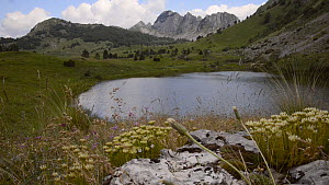 View of the Gornje Bare glacier lake in the Zelengora mountain range, with Stonecrops (Sedum) in the foreground, Sutjeska National Park, Bosnia and Herzegovina, July.  -  Nick Upton