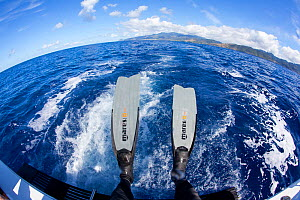 Flippers of free diver, wide angle view, Dominica, Caribbean Sea, Atlantic Ocean. January 2013.  -  Franco  Banfi