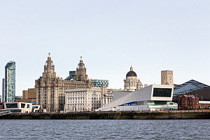 The Liverpool waterfront taken from a Mersey Ferry, showing the three graces (L to R) The Royal Liver Buildings, Cunard Buildings and Port of Liverpool Buildings with the Museum of Liverpool Building... - Graham  Brazendale
