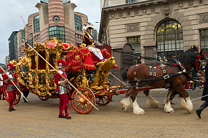 The Lord Mayor's golden State Coach pulled by six bay shires, leaves Mansion House, during the 799th Lord Mayor show, London, United Kingdom. November 2014.  -  Kristel  Richard