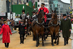Two warmblood horses pull a carriage during the 799th Lord Mayor show, London, United Kingdom. November 2014.  -  Kristel  Richard
