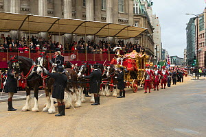 The Lord Mayor arrives at Mansion House in the golden State Coach pulled by six bay shires, during the 799th Lord Mayor show, London, United Kingdom. November 2014.  -  Kristel  Richard