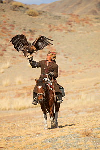 Eagle hunter mounted on Mongolian horse with his female Golden eagle (Aquila chrysaetos) at Eagle Hunters Festival, near Sagsai, Bayan-Ulgii Aymag, Mongolia. September 2014.. - Kristel  Richard