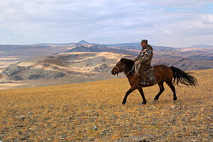 Ranger on his Mongolian horse looking out over plains at the foot of Dungurukh Uul mountain, near the border with China and Kazakhstan, Bayan-Olgiy aymag, Mongolia. September 2014..  -  Kristel  Richard