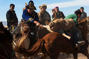Two eagle hunters mounted on Mongolian horses in tug of war game over dead goat during the Buzkashi games, at the Eagle Hunters Festival, near Sagsai, Bayan-Ulgii Aymag, Mongolia. September 2014.. - Kristel  Richard