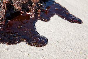 Oil on beach from the BP oil spill, Alabama, USA. Gulf of Mexico,  June 2010. - Krista Schlyer