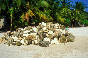Coral, harvested from barrier reef for construction, piled on beach, Baa Atoll, Maldives, Indian Ocean.   1998  -  Pascal Kobeh