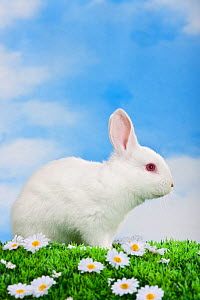 Young albino rabbit in studio on astroturf with flowers. - Klein & Hubert