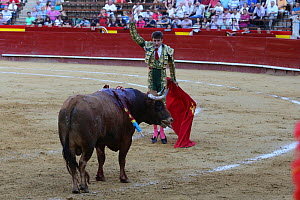 Bull fighting, Plaza de Toros, Valencia, Spain. July 2014. - Barry Bland