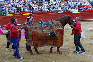 Horse wearing protective 'peto' padding during the first round of the bull fight,Tercio de Varas, Plaza de Toros, Valencia, Spain, July 2014. - Barry Bland