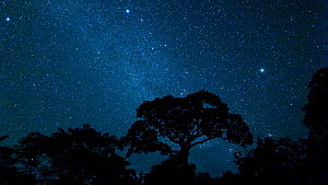 Time lapse of stars over a rainforest, with a Lupuna tree (Ceiba) in the foreground, Panguana Reserve, Huanuca Region, Peru.  -  Konrad  Wothe