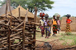 Lozi women carrying loads on heads, with cattle kraal (enclosure)  in the foreground, Sioma Nqwezi Park, Zambia. November 2010.  -  Steve O. Taylor (GHF)