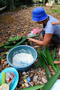 Woman wrapping rice in bamboo for cooking, West Kalimantan,  Indonesian Borneo. June 2010. - Steve O. Taylor (GHF)