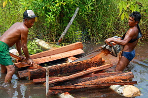 Deforestation -  men cutting logs in river with chainsaw, Gunung Palung National Park, West Kalimantan, Indonesian Borneo. June 2010. - Steve O. Taylor (GHF)