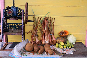 Farm produce outside house with yam, casava and pumpkins, with sugar cane press. Gunung Palung National Park, West Kalimantan, Indonesian Borneo. July 2010.  -  Steve O. Taylor (GHF)
