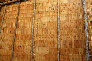 Wall of traditional Dayak longhouse, East Kalimantan, Borneo. June 2010. - Steve O. Taylor (GHF)