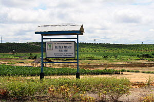 Sign for palm oil nursery at Pontianka, East Kalimantan, Indonesian Borneo. June 2010.  -  Steve O. Taylor (GHF)