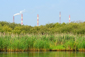 Oder delta rewilding area with factory chimneys in background, Stettiner Haff, on border between Germany and Poland, August.  -  Wild  Wonders of Europe / Widstrand