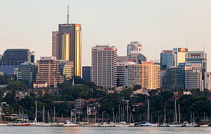 Sydney Harbour skyline in the evening light, New South Wales, Australia, October 2012. - Onne  van der Wal
