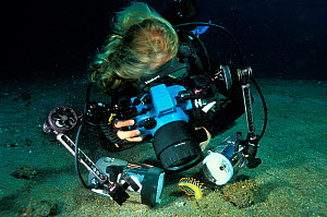 Female diver taking a picture of a shrimp (Periclimenes sp.) living in a sea pen (Pteroeides sp.) Philippines, Sulawesi Sea. - Pascal Kobeh