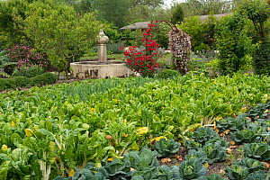 Organic garden of Michelin star restaurant 'La Chassagnette', Sambuc, Camargue, France, April.  -  Jean E. Roche
