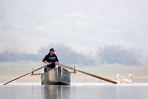 Fisherman rowing boat on Lake Kerkini. Lake Kerkini, Greece. February  -  David  Pattyn