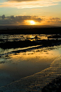 Sunset over Steart Marshes Wildfowl and Wetland Trust Nature Reserve, agricultural land transformed into wetland reserve, Somerset, UK, February 2015.  This area has been allowed to flood by the WWT a...  -  David  Woodfall