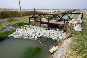 Plastic bottles floating in drainage trench, Armash fishponds, Armenia, May.  -  Martin Gabriel