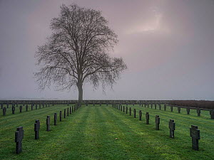 World War One German  cemetery in fog, Chemin Des Dames, France, December 2014.  -  Pascal  Tordeux