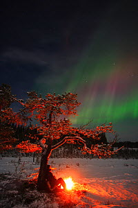 Man resting by tree with small fire, with Northern Lights in the sky above, Valdres, Norway, January 2005. - Ole  Jorgen Liodden