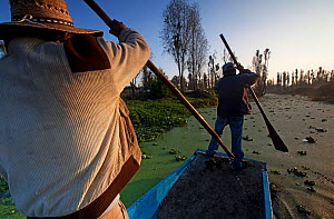 Men paddling through canal with Fat Duckweed (Lemna gibba) between chinampas, a wetland agricultural system. Xochimilco wetlands, Mexico City, October - Claudio  Contreras