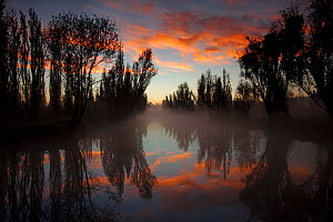 Canal between chinampas, a wetland agricultural system, at dawn, Xochimilco wetlands, Mexico City, November  -  Claudio  Contreras